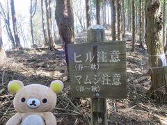 神奈川県 最高峰目指すクマ。蛭ヶ岳→焼山登山口