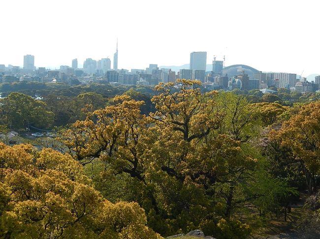 4月12日、午後3時40分過ぎに舞鶴公園に来ました。 母の入院先に見舞いした後、福岡城跡及び天神へ行きたかったので六本松経由で舞鶴公園に来ました。 桜の花は終わりに近かったですが、八重桜やつつじの花及び美しい新緑が見られました。本丸の天守台跡からの大濠公園、シーサイド百道の風景は素晴らしかったです。<br /><br /><br /><br />*写真は本丸天守台跡からみられる風景・・シーサイド百道が見られる