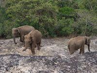 2019年ゴールデンウィーク スリランカの旅�〜ネゴンボ,タンブラ石窟、ミンネリア〜
