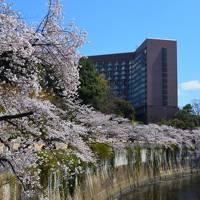 平成最期のお花見 【椿山荘周辺の景色】