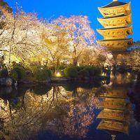 青春18きっぷの旅 2019年春 平成最後の桜を求めて[1] 〜京都、東寺の桜〜