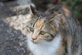 J15. 坂と猫の街 尾道