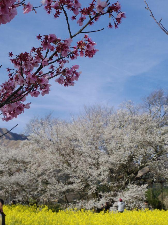 3・6歳児連れ、熊本の友人家族を訪ねて3泊4日:南阿蘇編