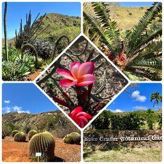 ✿ココクレーター植物園✿~Koko Crater Botanical Garden~
