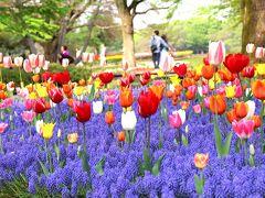 東京の花の名所