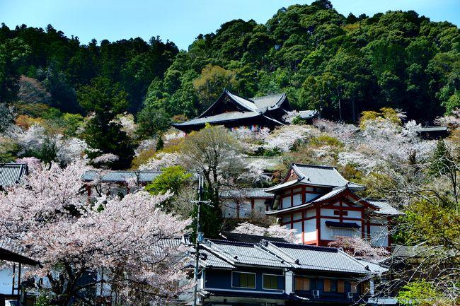 春の古都奈良巡り、最後は長谷寺へ。初訪問です。<br />長谷寺が花の御寺と言われる理由がわかりました。そこら中に綺麗な桜が咲き誇っていてとにかく美しい境内。<br />これからの季節はぼたんが楽しめるそうです。<br /><br />旅行記その1<br />https://4travel.jp/travelogue/11480490<br />旅行記その2<br />https://4travel.jp/travelogue/11480665<br /><br />行程は以下の通り。<br />1日目  新宿23時発 夜行バス「やまと号」に乗車<br />2日目  大和八木7時10分到着。電車を乗り継いで吉野へ。宿泊は生駒。<br />3日目   生駒観光&amp;長谷寺観光。新幹線で帰路。