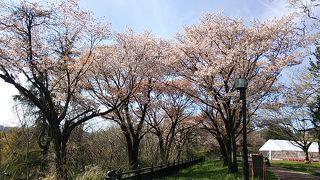 東京発日帰り?ワンデー宮城2019・04~宮城県の桜を楽しむ旅~(後編)