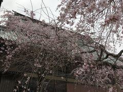 お花いっぱい!春爛漫わが町の花紀行 2019