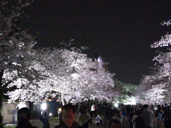 万博自然公園の夜桜を閲覧しました。
