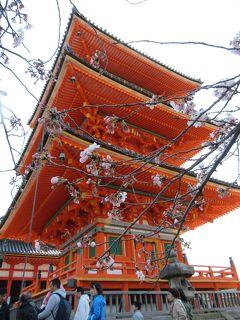 町屋の片泊まりで巡る京都の桜2019  その19  二年坂・産寧坂・イノダコーヒ・清水寺