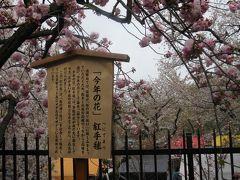 造幣局の桜の通り抜け2019