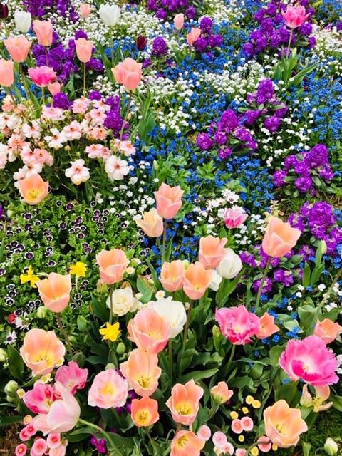 """<br />最近、所用で横浜・関内に出掛けることが多く、ハマスタ裏にある横浜公園で14万本の綺麗なチューリップを見ました。何だろう、と調べるてみました。<br />この催しは、「ガーデンネックレス横浜」なるプロジェクトのもと、さくら→チューリップ→バラと花を代えながら、また会場も、山下公園(メイン会場)、横浜公園、日本大通り、パシフィコ横浜などの「みなとエリア」と、よこはま動物園ズーラシアに隣接する「里山ガーデン」の2カ所で行われてるらしい。<br /><br />以下、HPにあった林市長の挨拶文を抜粋。<br />「2017年に開催した「全国都市緑化よこはまフェア」は、市の内外からお越しになった600万人もの方々にお楽しみいただくことができました。このレガシーを継承し、発展させようと、花と緑にあふれる""""ガーデンシティ横浜""""の取組を進めており、昨年から展開している「ガーデンネックレス横浜」は、そのリーディングプロジェクトです。」<br /><br />また、NHK・Eテレの「趣味の園芸」でメインナビゲーターを務める三上真史さんがアンバサダーとして参加。彼の挨拶から抜粋。<br />「今年は、旭区・緑区・瀬谷区・港南区が区制50周年、ズーラシア開園20周年、里山ガーデン3周年を迎えることをお祝いするという思いから、ウェルカムガーデンは「ハッピー フラワーケーキ」というテーマにいたしました。」<br /><br />これは行くしかないということで、4月21日(日)横浜市旭区の「里山ガーデンフェスタ」に行ってきました。<br /><br />"""