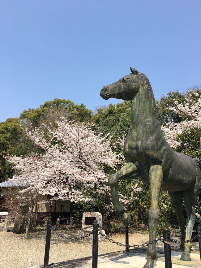 京都一周トレイルは、京都市を囲む山を手軽に楽しめるように整備されたウォーキングコースです。<br />京都の東南、伏見桃山から、比叡山、大原、鞍馬を経て、高雄、嵐山、苔寺に至る全長約83.3キロのコースと、豊かな森林や清流、田園風景に恵まれた京北地域をめぐる全長約48.7キロのコースからなります。<br /><br />これまでに北山西部、西山、東山コースを歩きましたが、最後に東山コース(蹴上~銀閣寺道)を歩いたのはなんと5年前!<br />知らない間に東山コースの伏見・深草ルートが開設されていました。それを知ったのはある気になるスポットがあり、そこを調べていて、京都一周トレイルのコースに入っていることを知ったのです。<br />早速友人Mに声をかけ、ハイキングのついでに桜も見れたらいいね~ってな感じで出かけてきました。結果、大満足な春の遠足となりました♪<br /><br />見所が沢山あり、写真も多くなったので前半と後半に分けて旅行記を書きます。この旅行記は伏見・深草ルートの前半、京阪・伏見桃山駅から伏見城までの様子です。桜の見ごろで思いがけずお花見が楽しめました♪