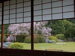 2019・04 今年の桜