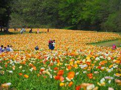 FLOWERトライアングル 国営武蔵丘陵森林公園
