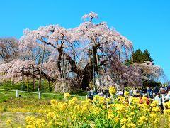「 日本三大桜【三春の滝桜】 花の王国・ふくしま3つの名桜めぐり2日間 」 2019