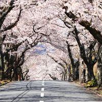 たまには親孝行 女3人伊豆高原で食べて・温泉浸かって・桜観て