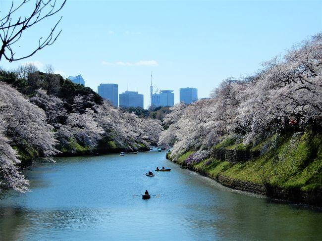 満開の桜が見たくなって、阪神戦のついでに出かけました。<br />ちょうど平成最後の皇居乾通りの桜も見られました。<br />桜は天候にも恵まれましたが、メインの阪神戦で悲劇が訪れました。