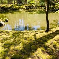 世界文化遺産の西芳寺(苔寺)で、憧れの苔の庭園を見て来ました!