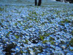 ひたち海浜公園で一面の青と遭遇