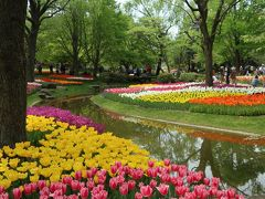 オランダのキューケンホフと雰囲気が似た昭和記念公園のチューリップ
