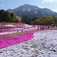 平成最後の遠出 秩父鉄道「SLパレオエクスプレス」と羊山公園の芝桜(*^_^*)