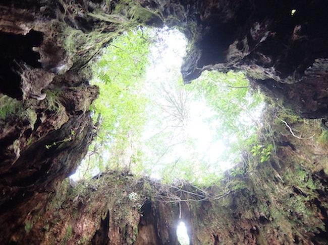 屋久島、縄文杉とリゾート満喫の旅