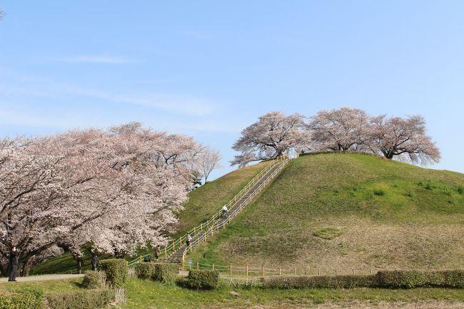 昨年、偶然ここの桜に訪問したら、そのすばらしい景観にびっくりで、その時はすでに葉桜が多かったので、今年は満開の時に訪問しようと思っていました。<br /><br />今回、その近辺の桜と合わせ、訪問してみました。<br /><br />以下、行程です。<br />さきたま古墳群の桜→熊谷桜堤→藤岡市の古墳(七興山古墳、白石稲荷山古墳)→こだま千本桜<br /><br />