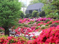 根津神社、ツツジは今年も見事です・・・