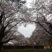みちのく三大桜と津軽お花見列車3日間の旅