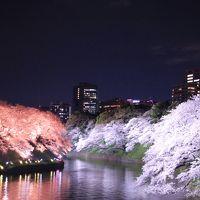 東京夜桜見物:千鳥ヶ淵、日本橋さくら通り、アークヒルズ、東京ガーデンテラス紀尾井町、東京ミッドタウンなど2019年4月