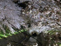 2019桜の季節 茶碗が目当ての近江旅