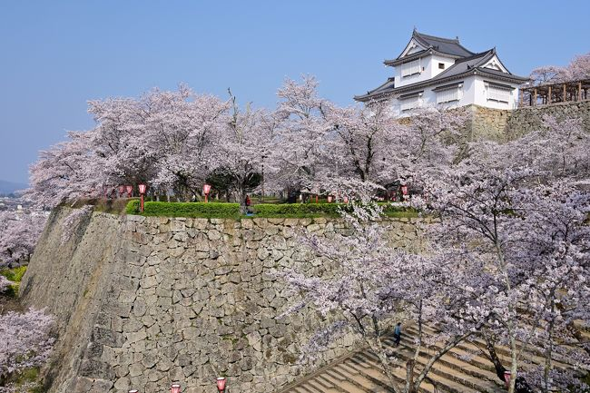 2019 さくらの名所を巡る旅《Part.3》 ~津山城&城下町探訪① 豪壮な石垣群と1,000本の桜の競演~