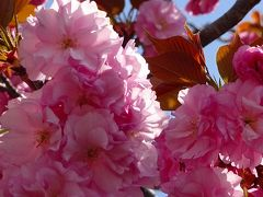 万博公園へチューリップを見に行きました(完) チューリップ園の近くに咲くお花達。