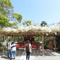 GW前の鎌倉・花散歩