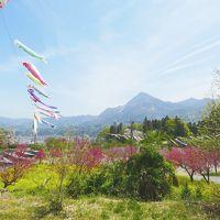 【2019年】里山の鯉のぼりと羊山公園の芝桜と美の山の桜と ( 春の秩父は花がきれいだから結局は秩父にまた行きましたという話です)