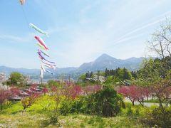 【2019年】里山の鯉のぼりと羊山公園の芝桜と美の山の桜と( 春の秩父は花がきれいだから結局は秩父にまた行きましたという話です)
