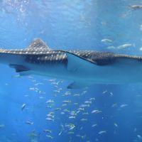 海洋博公園散策 沖縄美ら海水族館 海洋文化館 熱帯ドリームセンター