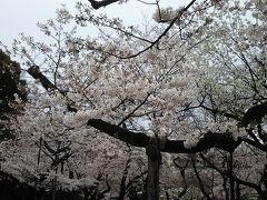 寒空の桜散歩とランチ