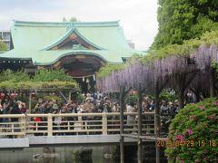東京ぶらり旅 : 亀戸天神 ・ふじ祭り