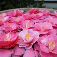 京都・さんぽ地図の旅 �銀閣寺〜哲学の道