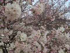 新宿御苑で花見仕舞い