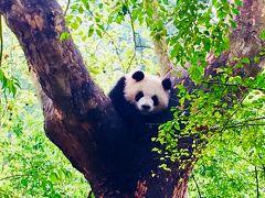 シャンシャン四川省新居の下見ツアー(4)成都ジャイアントパンダ繁殖研究基地