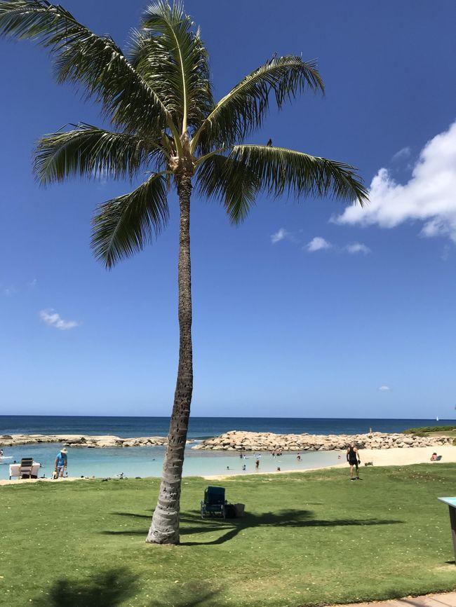 年に2回のハワイ旅行が決まりになっている私たち夫婦。<br />たまには違う所にと思うものの、やはりハワイに引き寄せられ・・・。<br />ありきたりな10日間のコンドミニアム生活の記録です(^^♪<br />