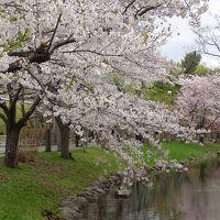 さよなら平成!!令和初日に春爛漫!東京旅行の余興で春の北海道を満喫^_^ 〜さっぽろ・新千歳空港編〜