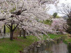 さよなら平成!!令和初日に春爛漫!東京旅行の余興で春の北海道を満喫^_^ ~さっぽろ・新千歳空港編~