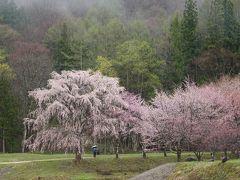 2019年4月 桜が見ごろの信州とジンギスカンの香り漂う美術館 +道の駅めぐり27