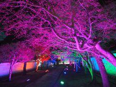 青春18きっぷの旅 2019年春 平成最後の桜を求めて [4] ~京都、妙顕寺の桜とライトアップ~