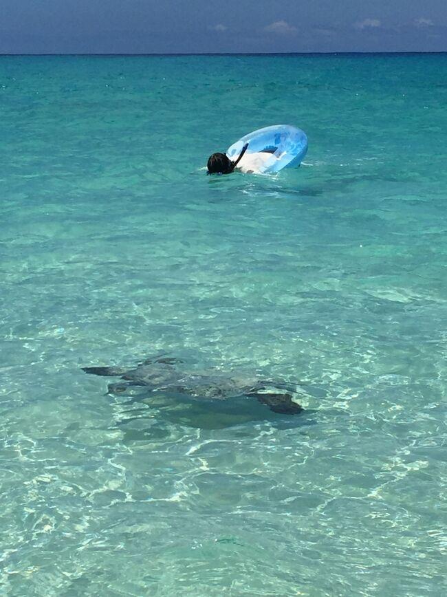 7日目スタート!<br />アホボンはひと足先に帰国の途につくので、コナ空港まで送って、その後はようやく海で泳ぎます(^_^)<br /><br />こちらも終日活動できる最終日なんで、存分に楽しむぞ!!<br /><br />昨年よりホームをGrand Waikikianに移したので、ビジターとしての滞在です。<br />そうは言っても半年前には余裕で予約できたので、まだKINGS' LANDは狙い目かも...<br />グレードアップ時のボーナスポイントも使って2BD PLUSのお部屋に宿泊!<br />アホボンも広島から1日遅れで参戦して、1日早く帰国するという超過密スケジュール<br /><br />平成天皇退位と令和天皇即位で思いがけず超大型連休になり、大っぴらに休めるので細かくメールチェックしなくて済むかも?<br /><br />せっかくなんで思いっきり楽しみます<br />