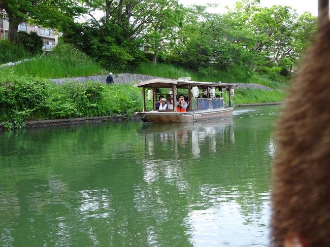 GWに京都 伏見へ行きました。<br />十石舟が予約出来たので、<br />酒蔵見学やきき酒、<br />龍馬の寺田屋などを楽しみました♪<br />特に十石船は、<br />新緑の季節の中、<br />風も心地よく、船からの景色も大変綺麗でした。<br />両側の花も季節に合わせて楽しめると思います。<br />予約ができれば、紅葉の頃も素晴らしいでしょうね。<br />乗車券提示で1割引のお店で<br />きき酒をしました。<br />他にもお酒を飲めるお店がたくさん!<br />お酒好きな人には楽しい場所でしょう。<br /><br />GWで大変混雑する京都を少し離れただけで、ほどほどの人混みが良い静かな伏見観光でした。<br />